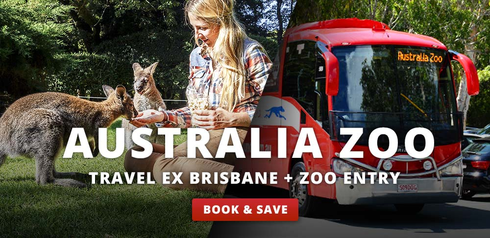 Australia Zoo Packages, Travel ex Brisbane and Australia Zoo Entry included