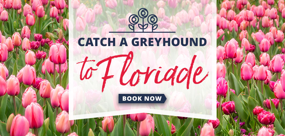Catch a Greyhound to Floriade
