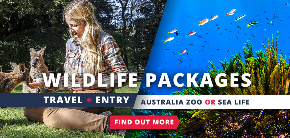 Wildlife Packages - Travel and Entry