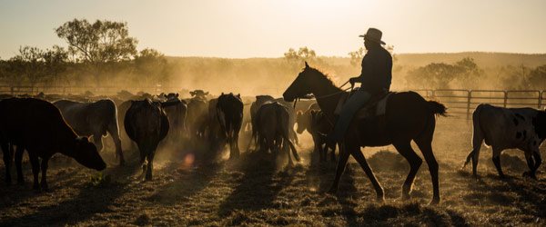 Australian Stockman's Hall of Fame & Outback Heritage Centre